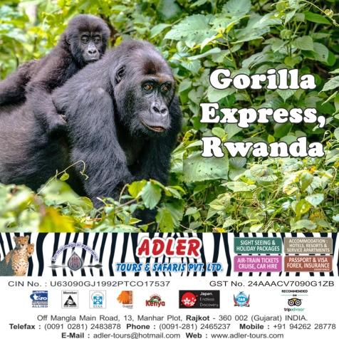 gorilla1 copy