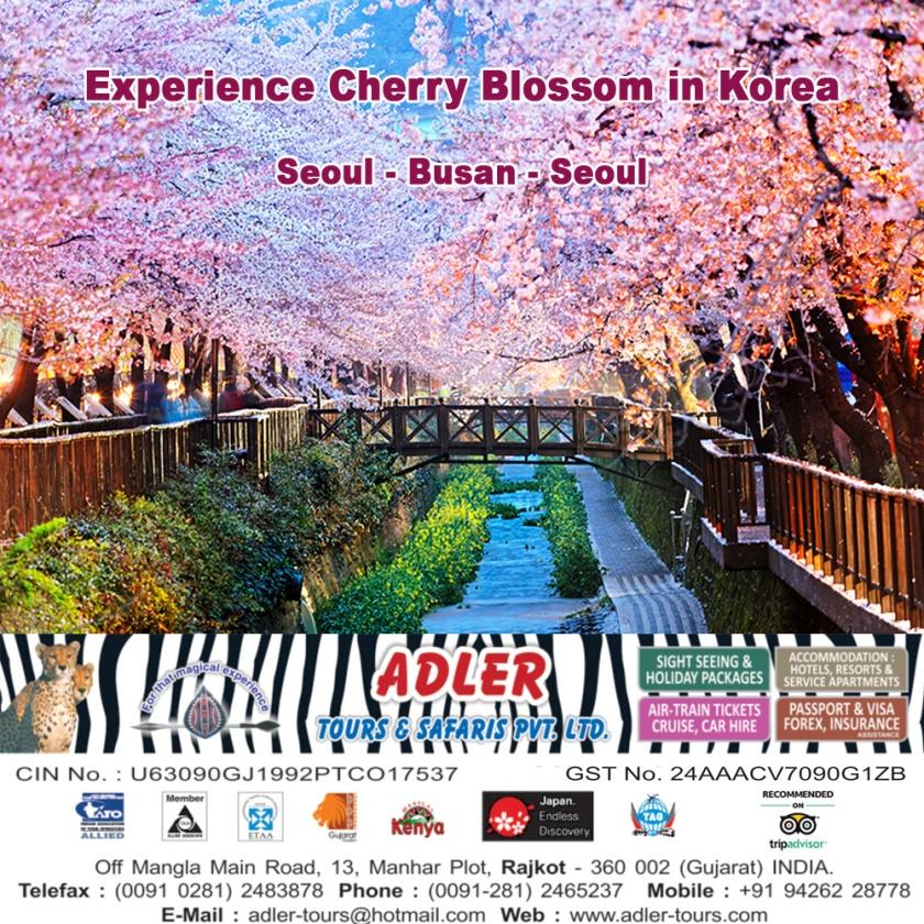 Cherry Blossom Korea copy