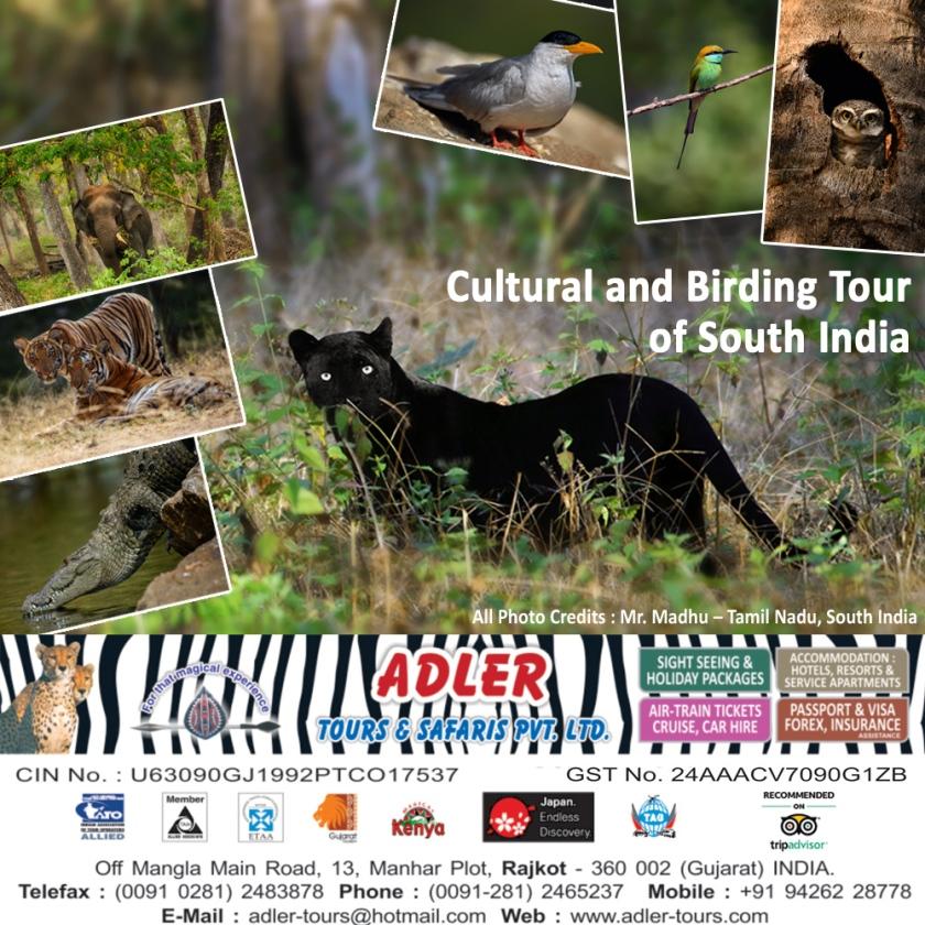 birding tour1 copy