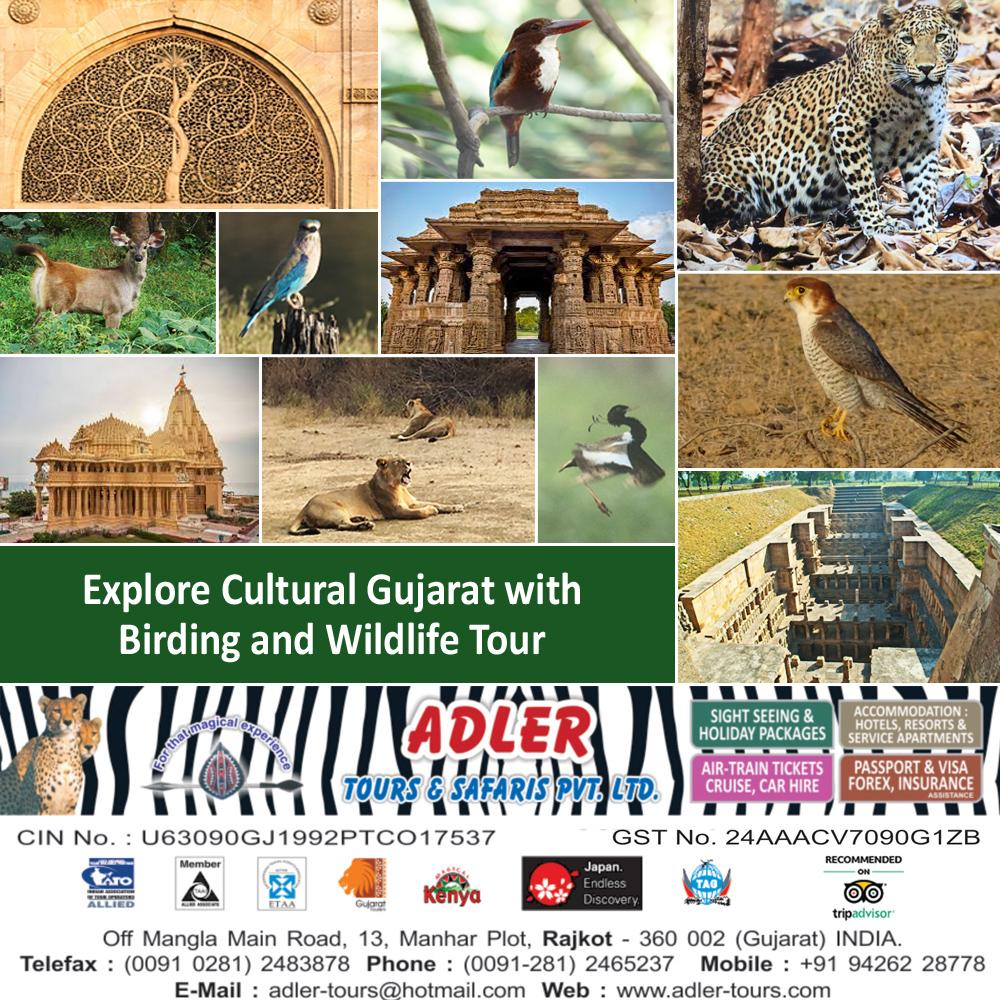 Gujarat Birding copy