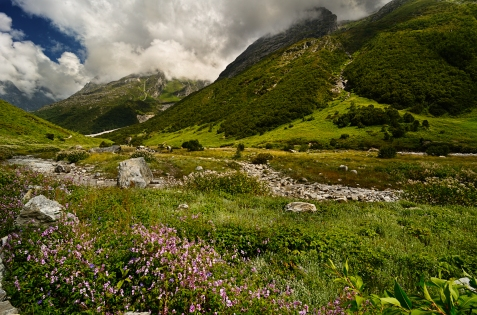 Valley of Flowers2