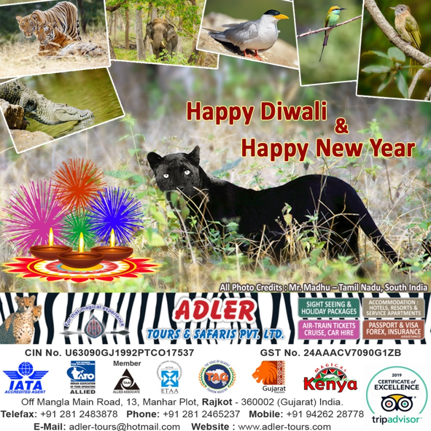 DIWALI GREETING 2019 copy